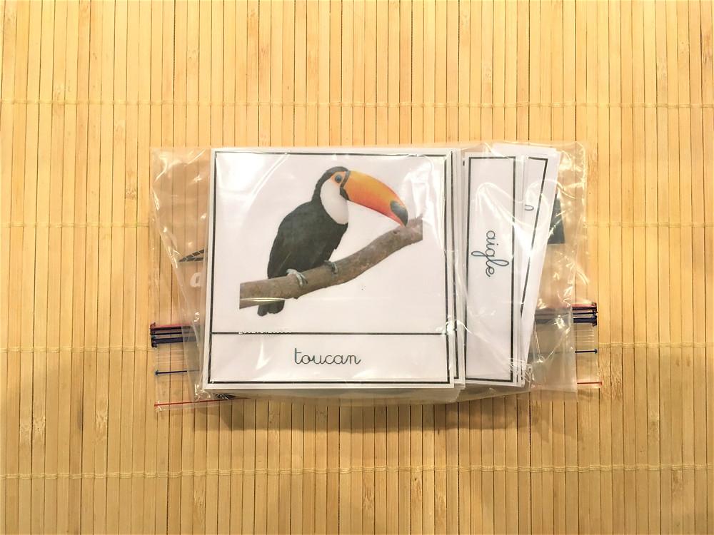 Atelier DIY Montessori : Les Oiseaux (cartes classifiées)