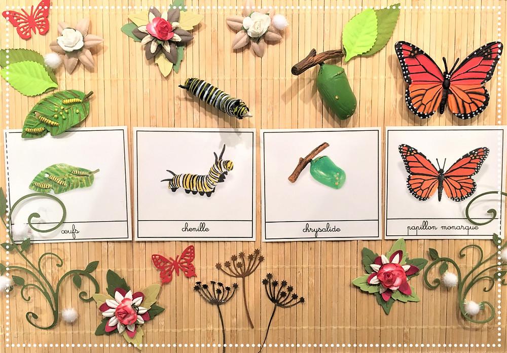 DIY Atelier Montessori : Cycle de la Vie du Papillon Monarque (PDF)