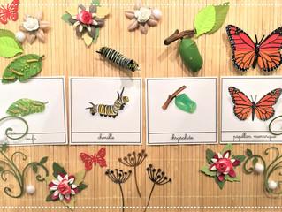 DIY Atelier : Cycle de Vie du Papillon Monarque (PDF)