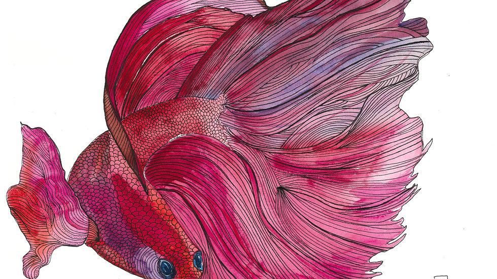 Watercolor Beta Fish Fine Art Print