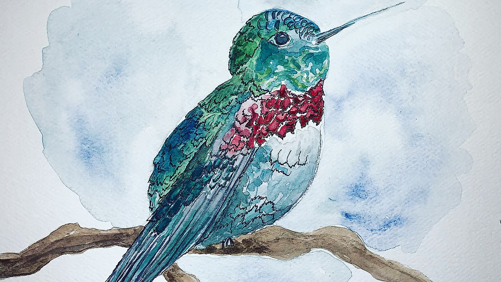 Harry the Hummingbird Fine Art Print