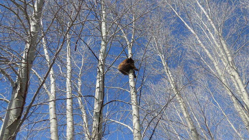 It's a Bird,It's a Plane, It's a....Bear?