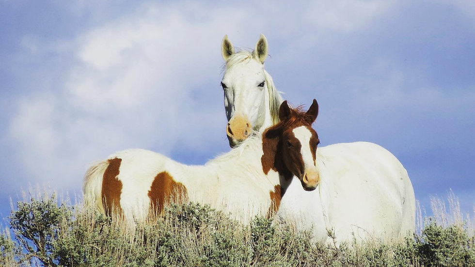 Sandwash Horses