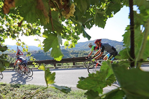 Italy! Prosecco Cycling 1DAY Tour to Valdobbiadene (Jul-Sep), price for 1-8 ppl