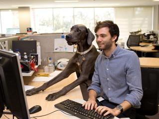 Tener un perrito como compañero de trabajo ya no es una locura