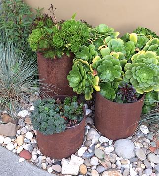 Succulent garden idea