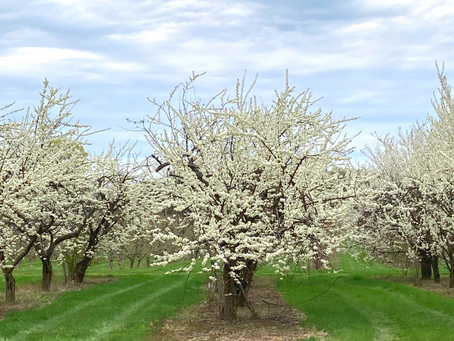 Orchard Update: Springing to Action!
