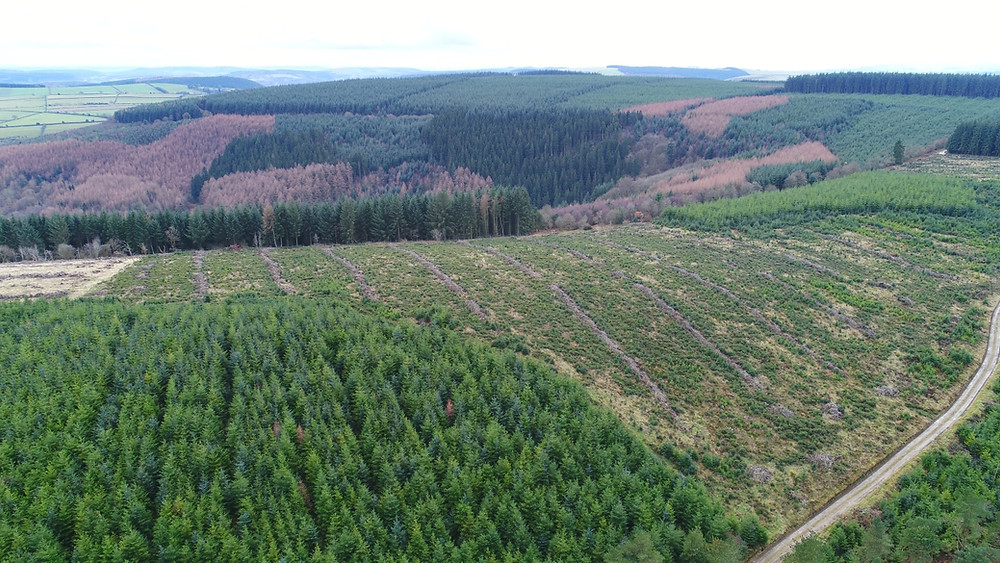 Aerial view of forest management in a designated Area of Outstanding Natural Beauty, Shropshire, UK
