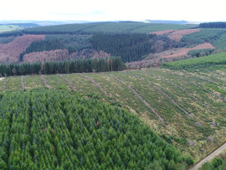 UK Forests to benefit from Laser Scanning Drones