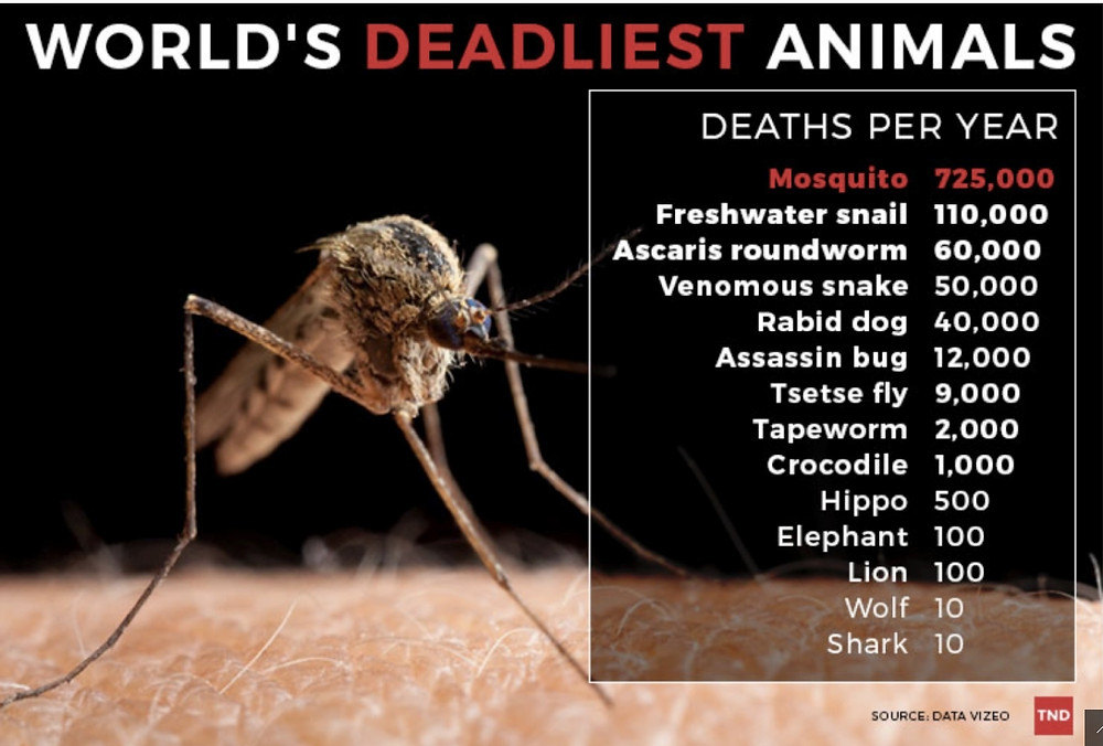 Close up of mosquito and statistics of human deaths caused by animals