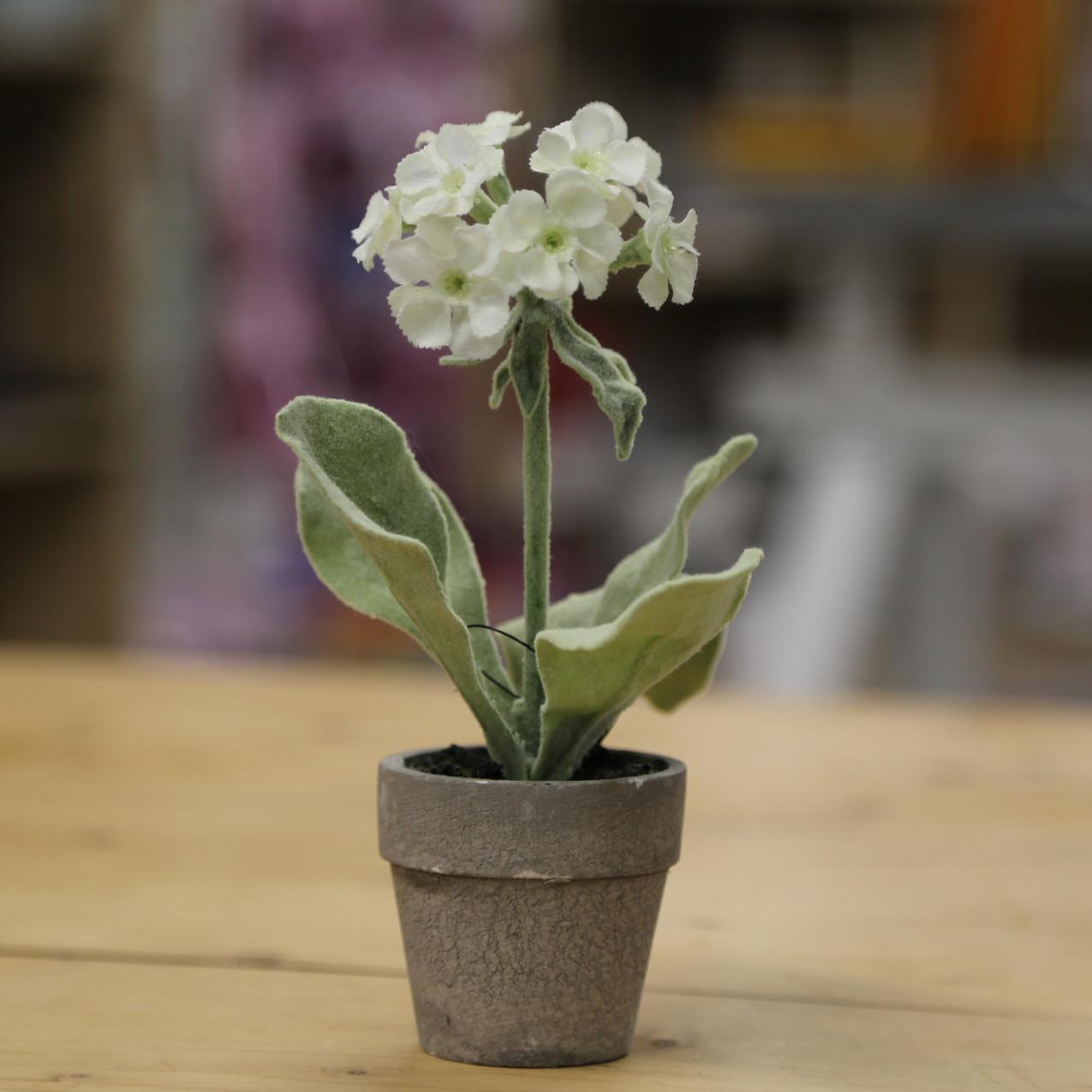 White artificial primrose