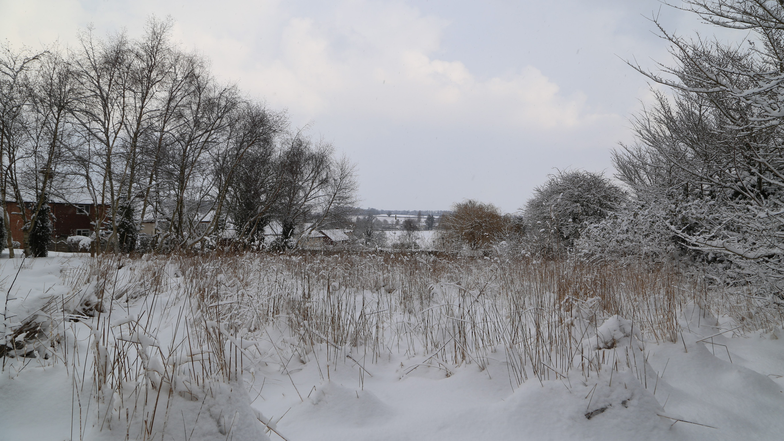 Looking towards the meadows