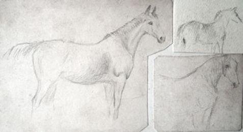 Study of three horses