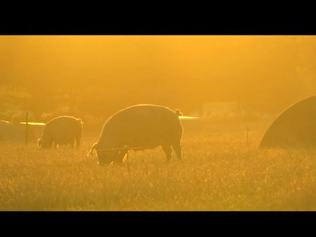 Pork from Dingley Dell - watch their video