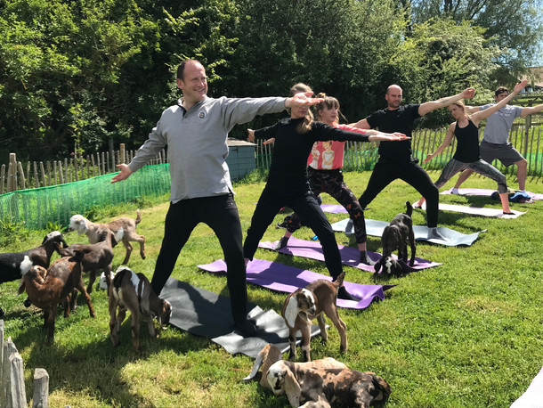 Goat Yoga pictures provided by Diana Malone