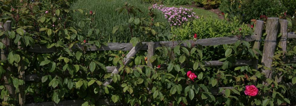 Suffolk Heritage Garden, The Suffolk Punch Trust