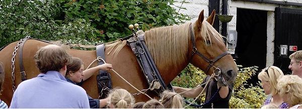 horse demonstration_edited.jpg