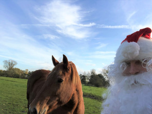Father Christmas and the Suffolk Punch