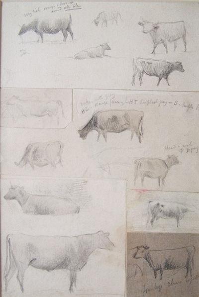 Studies of Bullock