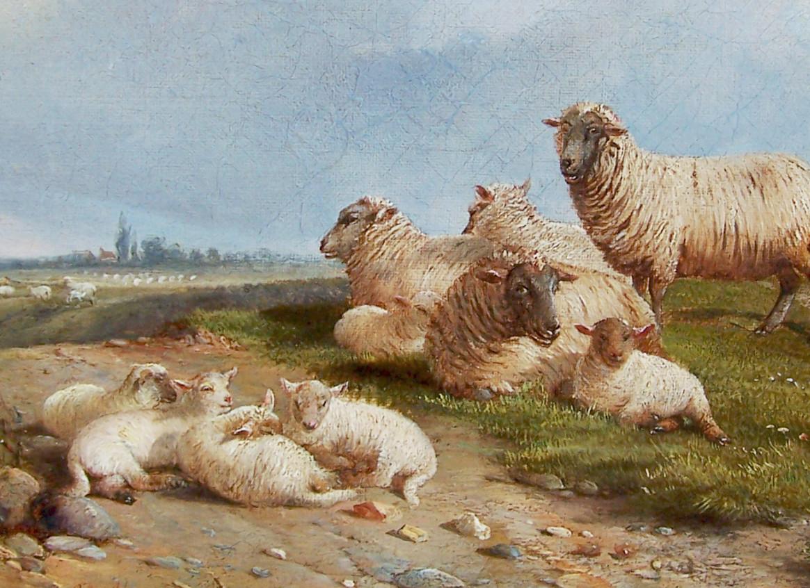 Sheep, Rushmere Heath by Duvall.jpg