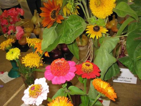 village show flowers.jpg