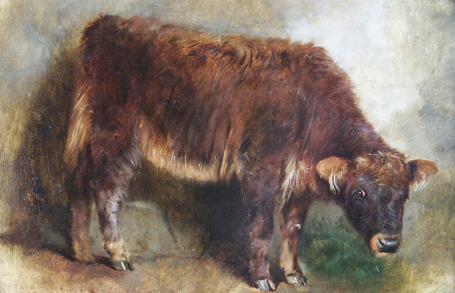 A J Stark calf