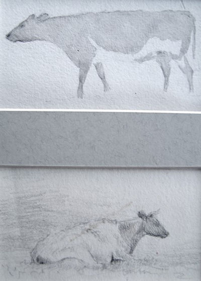 Studies of two cows