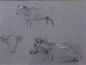 Study of three cows