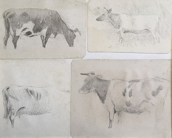 Four Studies of cows