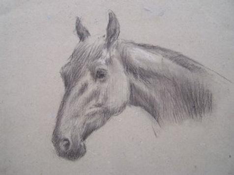 Horses head.jpg
