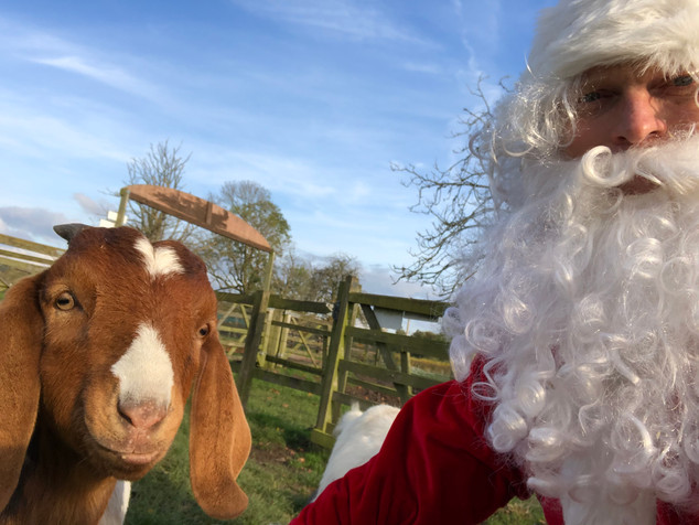 Santa meeting the goats