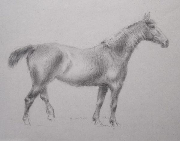 Standing horse Doughty