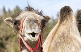 camel-4107807_1920.jpg