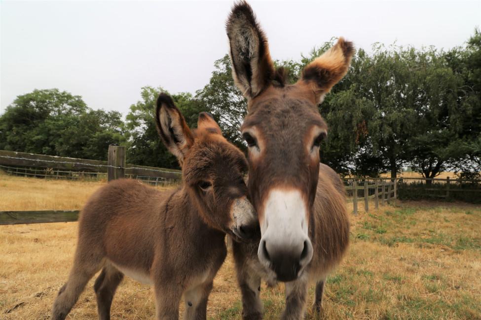 Cute Donkeys.jpg
