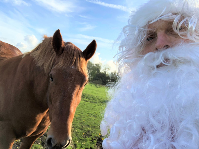 Suffolk Punch and Santa