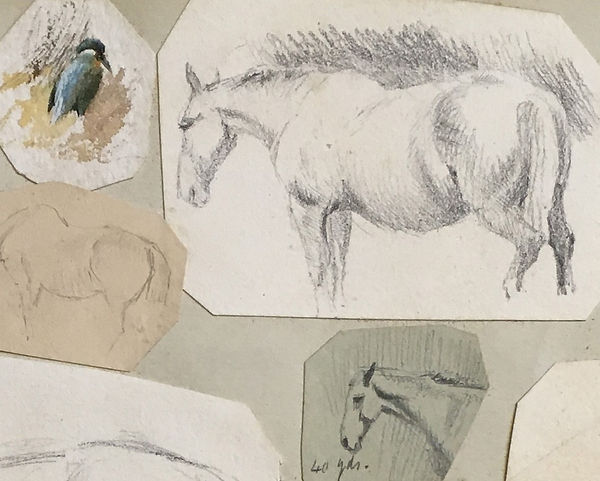 Studies of horses detailed