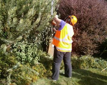 Volunteer trimming hedges
