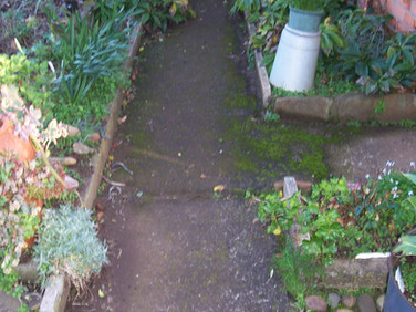 Overgrown garden footpath