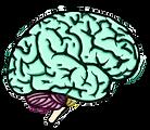 neurocirurgiao que os médicos indicam - Especialidade: Neurocirurgia. Dr. Grossi, neurocirurgiao