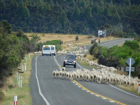 Nouvelle-Zélande - Ile du Sud - dernière partie et clap de fin