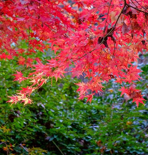 fall%20folage_edited.jpg