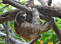 Sloth.jpeg