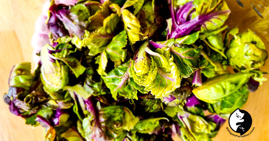 Purple Brussels sprouts