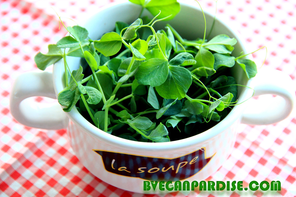 Pea shoots are the best vitamin source during the dark winter season and good to use in the early spring (hungary gap)