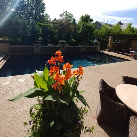 flowers poolside