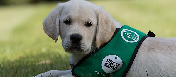 Dogs for Good newsletter image 800 x 350
