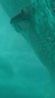 2021 ocean film festival world tour 30 sec trailer Story.MP4