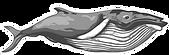 WhaleHeader.png