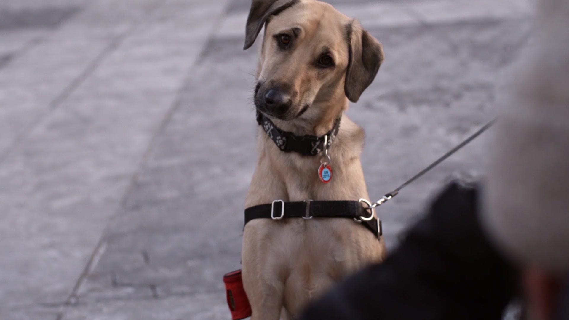 Top Dog Film Festival Trailer UK_LOCALIS