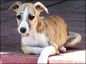 celene-puppy.jpg